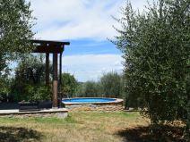 selva degli ulivi